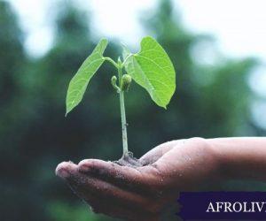 Plantes médicinales africaines 750x400